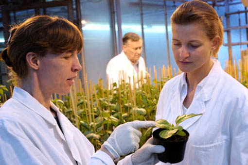 Agricultural scientists